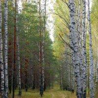 Смешанный лес :: Александр Буянов