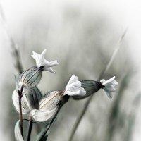 Полевые цветы :: Олег Фиедориенко