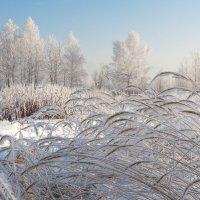 Мороз и солнце... :: Кристина Константиновна