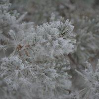 Морозное утро :: Татьяна Гайтерова