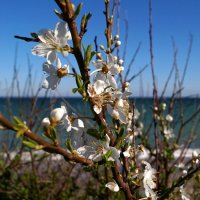 Весна на Черном море :: TolyboG (Анатолий) Богаченко