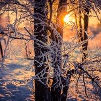 Along the winter sun :: Лия Чурина