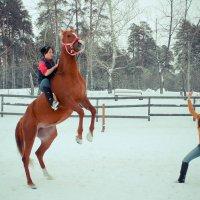 Игры с лошадью :: Александра Карпушкина