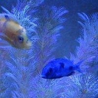 Обитатели аквариума...2 :: Тамара (st.tamara)