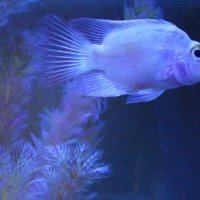 Обитатели аквариума...3 :: Тамара (st.tamara)
