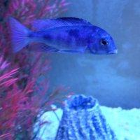 Обитатели аквариума...5 :: Тамара (st.tamara)