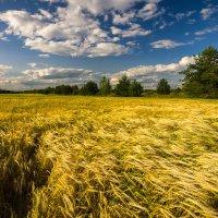 Мажорная мелодия ветра :: Валентин Котляров
