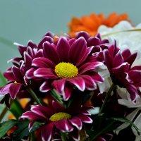 Цветы :: Владимир KVN