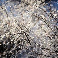 В белом наряде из меха снегов :: Ирина Данилова