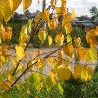 листья желтые над городом кружат :: Елена Семигина