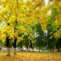 красавица золотая осень :: Елена Семигина