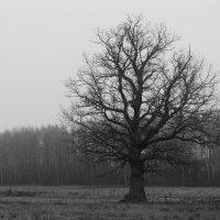 Одинокое дерево :: Екатерина Макарова