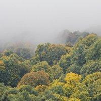 По верхушкам деревьев :: Сергей Бесов