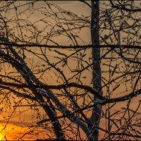 1,618 или закатное золотое сечение :: Маргарита Лапина