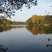 Золотая осень. Салтыковка. Тарелочкин пруд. :: юрий