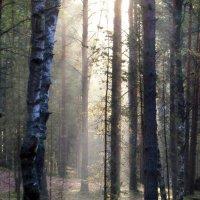 Лесные просветы.... :: Юрий Цыплятников