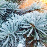 зима :: Анастасия Пирогова