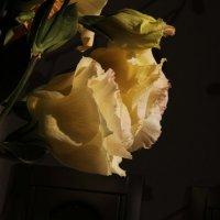 Цветы :: Алёна Маненкова