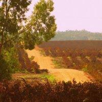 сквозь виноградник :: Алона Цыпина