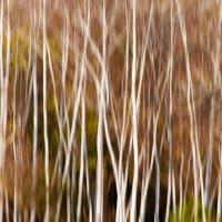 осенняя палитра 5 :: елена перевалова