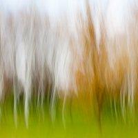 осенняя палитра 3 :: елена перевалова