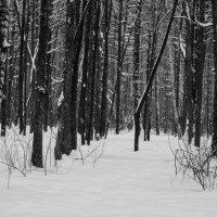 тихий лес :: Алина Граф