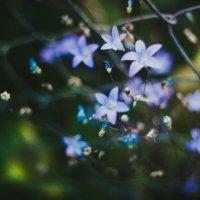 flowers :: Elena Alexandrovna