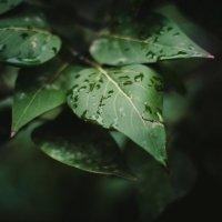 листья :: Elena Alexandrovna