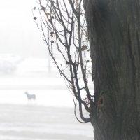 Одиночество.. :: Дмитрий Бойко