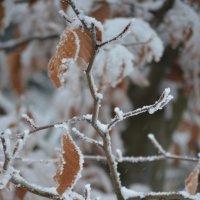 ка бы ни было зимы :: Kate Vakhrina