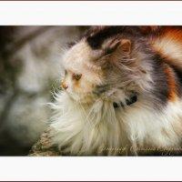 ... Кошачья КРАСОТА ... :: Светлана Супрунова