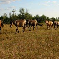 Марина Зайнутдинова - Ходят кони на закате :: Фотоконкурс Epson