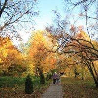 Прощание деревьев :: Владимир Немцев