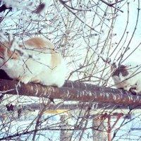 Коты :: Кристина Калягина