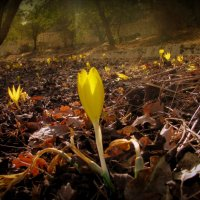 желтые свечи осени :: Алона Цыпина