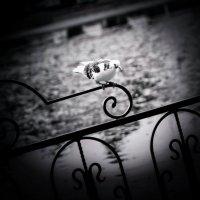 Одинок.. :: Катерина ivi