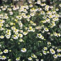 цветы любви :: Christina Paul