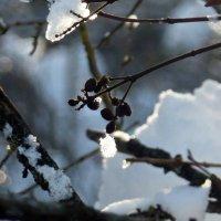 Зима :: Dasha Swarovski