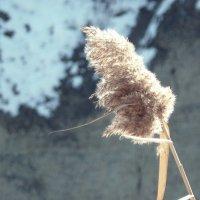 Легкость.Ветер :: Dasha Swarovski
