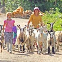 Пастушки :: Андрей Черемисов