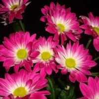 Хризантемы :: Mariya laimite