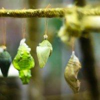 как раждаются бабочки. :: Мария Шигина