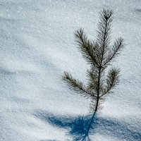 На севере диком стоит одиноко... :: Aleksandr Kachan