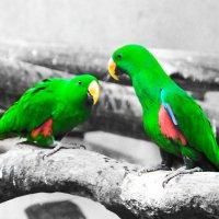 попугайки :: Елена Натфулина