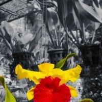 Орхидея :: Елена Натфулина