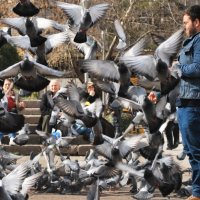 Парень кормит голубей :: Elena Balatskaya