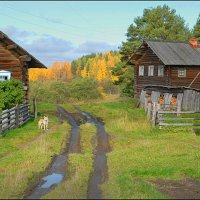 Осень в деревне. :: Виталий Внимательный.
