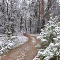 После снегопада :: Диана Задворкина