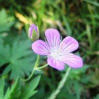 цветок :: Вера Бабкова