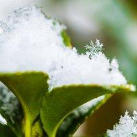 последние снежинки этой зимы :: человечик prikolist